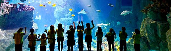 Plymouth City Breaks National Marine Aquarium