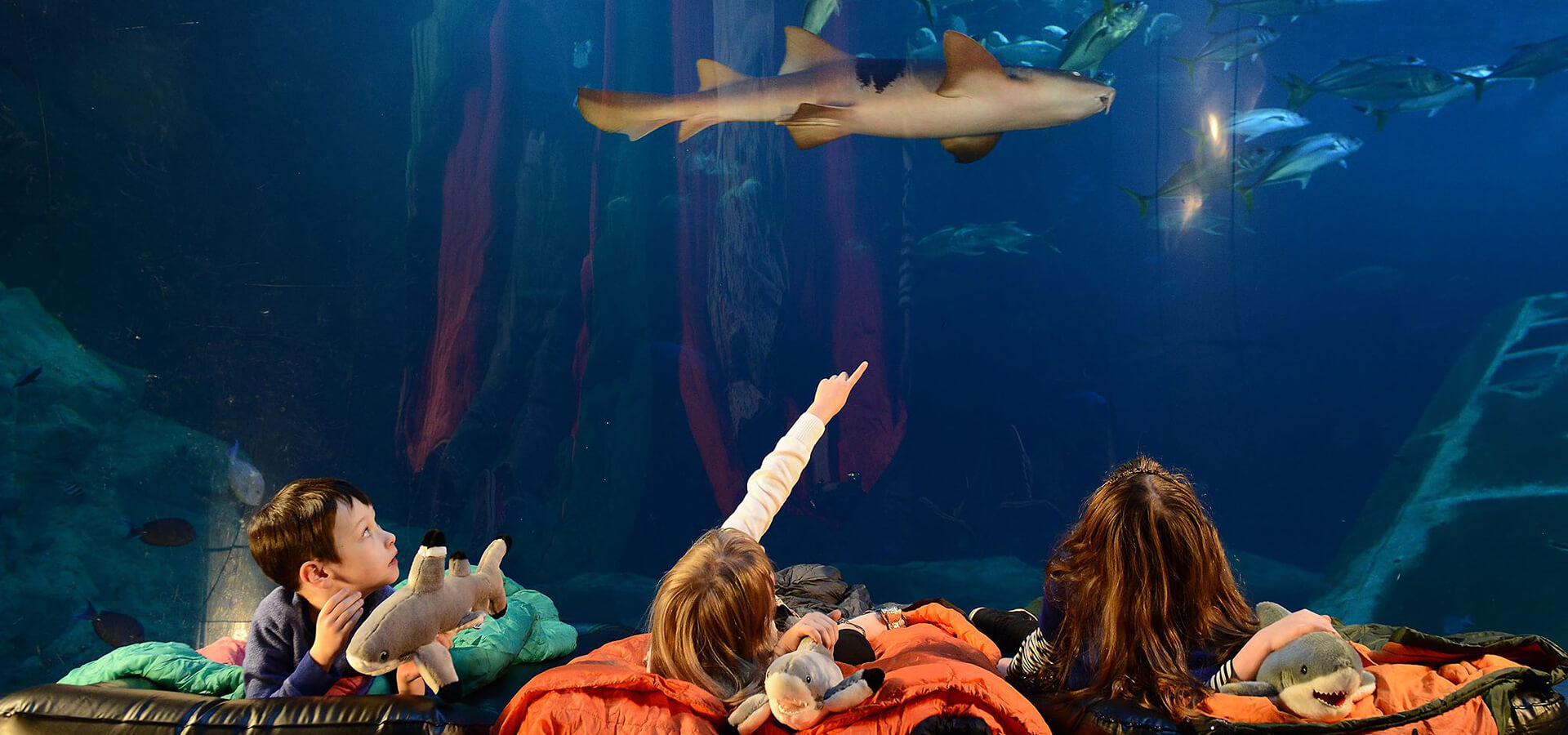 Plymouth-Attraction-National-Marine-Aquarium-UK.jpg
